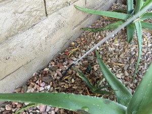 Drip Irrigation Leak